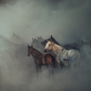 The lost horses by 1x