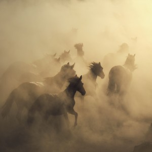 migration of horses by 1x