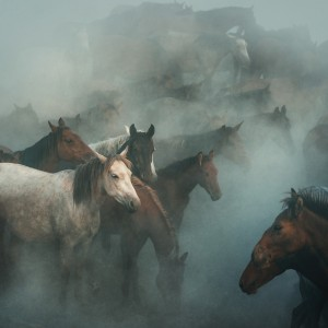 lost horses by 1x