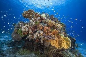 Underwater biodiversity by 1x