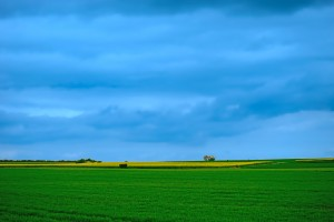 Painted Fields by 1North