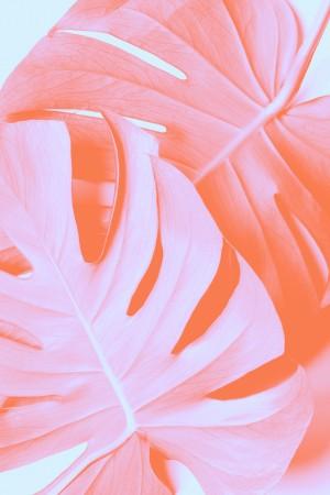 Monstera Orange 03 by 1x