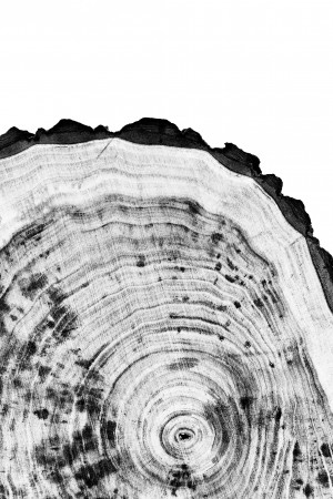 Tree ring 2 by Actarus Studio