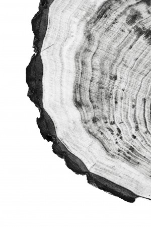 Tree ring 9 by Actarus Studio