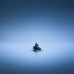 Bonsai tree by Alex Bihlo
