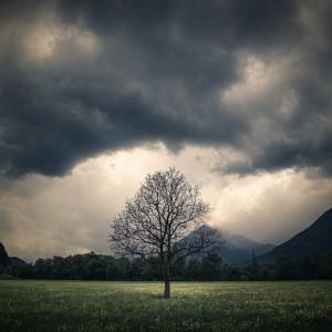 The tree of life by Alex Bihlo