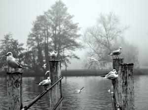 Birds in UK by Amazing
