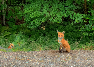 foxies by Amber Vee Photography