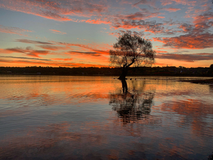Water Tree by Amber Vee Photography