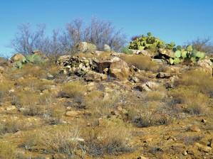 Rock n Cactus by Arizona Photos by Jym