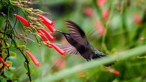 Hummingbird by Audie Alexander