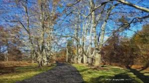 Talltree p by Brian Fang