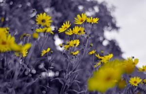Still yellow by Codrina Miculit