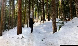 Walking in the woods  by Cody Lee