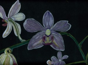 Orchids by Crystal Wacoche