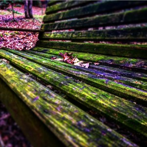 Mossy Bench by DH Photo Concepts