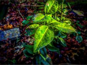 Color Pop Plant by DH Photo Concepts