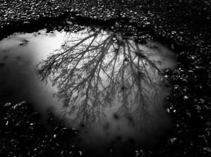 Nature Puddle by DH Photo Concepts