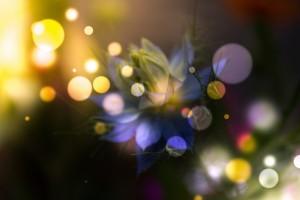 Light Magic by Dagmar Marina