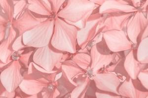 Coral Floral by Daniel Ferreia Leites Ciccarino