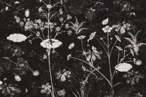 Dark Floral Artwork by Daniel Ferreia Leites Ciccarino