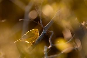La petite jaune by DanielTphoto