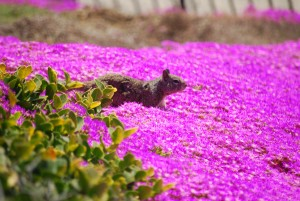 Pink Wild Flowers on a Hill With a Squirrel by Darryl Green
