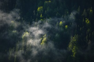 Clouds and green trees by Dom Granger Photography