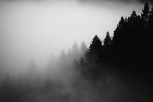 Pine trees in the fog by Dom Granger Photography