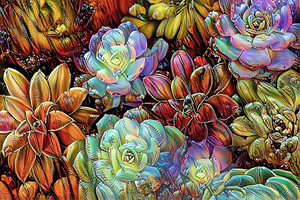 Garden Succulents by HH Photography of Florida
