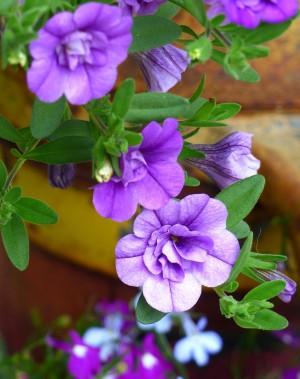 Purple Petals by J  Jasmyn Phillips