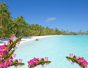 Orchids Floating on the Beach by Jennifer Jones