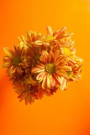 Orange scent by Ji