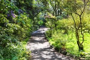 Garden Path by John Foster