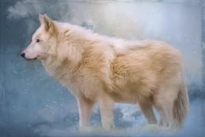 The Spirit Within - Arctic Wolf Art by Jordan Blackstone by Jordan Blackstone