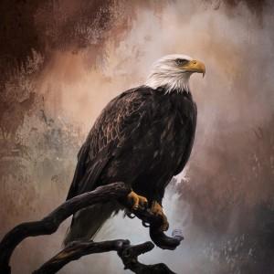 Looking Forward - Eagle Art by Jordan Blackstone by Jordan Blackstone