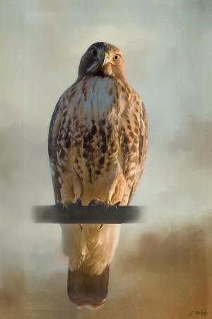 View Life - Hawk Art by Jordan Blackstone by Jordan Blackstone