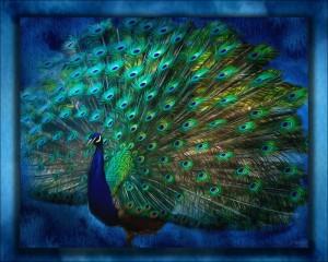 Being Yourself - Peacock Art by Jordan Blackstone by Jordan Blackstone