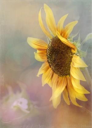 Be The Sunflower - Sunflower Art by Jordan Blackstone by Jordan Blackstone