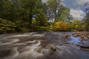 Autumn on the river Tawe by Leighton Collins