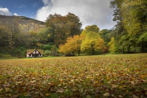 Autumn at Craig-y-Nos Country park  by Leighton Collins