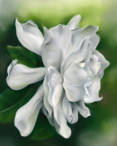 Gardenia Flower White on Green by MM Anderson