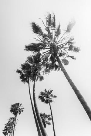 Palm Trees in the sun | monochrome by Melanie Viola