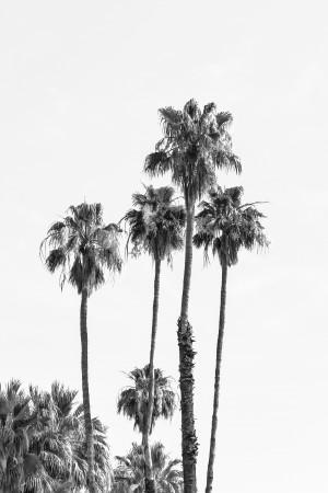 Palm Trees at the beach | monochrome  by Melanie Viola