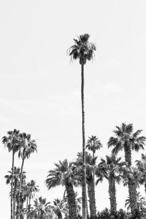 Palm Trees Summertime | monochrome  by Melanie Viola