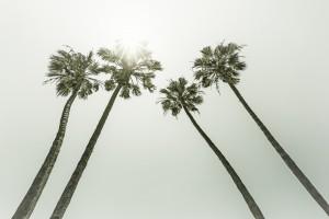 Palm Trees in the sun | Vintage by Melanie Viola