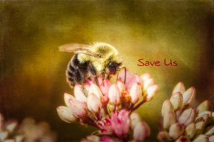Save Us by Michel Soucy