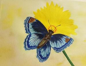 Blue Butterfly by Shankar Kashyap
