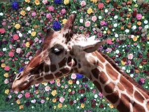 Giraffe with Flower Background by Wallshazam