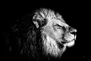 Lion with Attitude by dePace-
